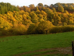 Light on the oaks
